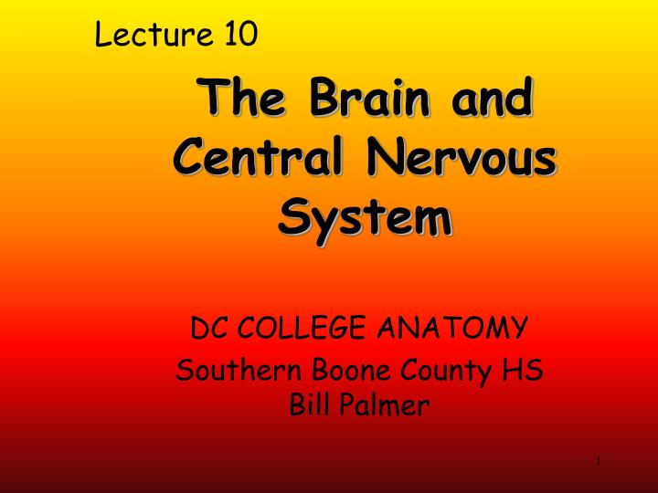 PPT - The Brain and Central Nervous System PowerPoint