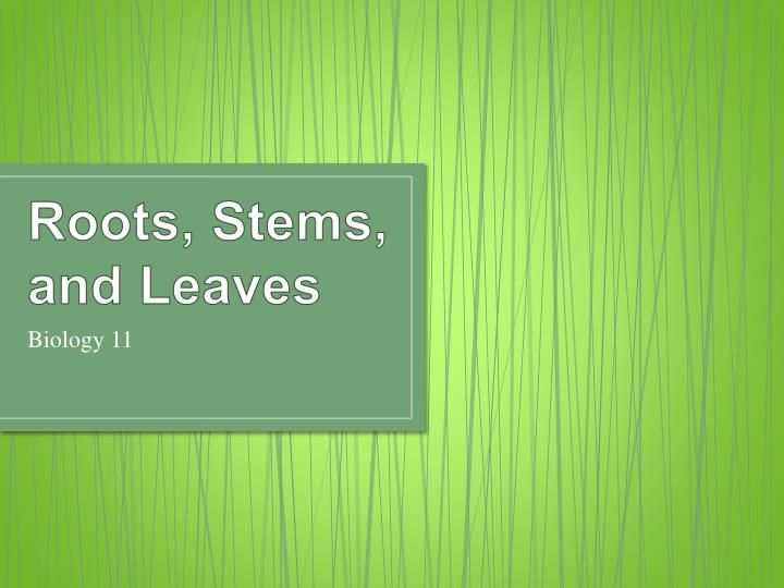 Roots stems and leaves