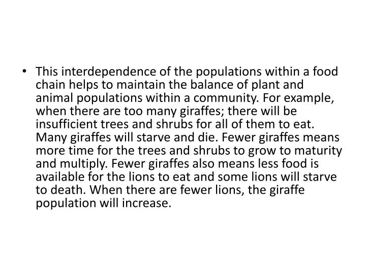 This interdependence of the populations within a food chain helps to maintain the balance of plant and animal populations within a community. For example, when there are too many giraffes; there will be insufficient trees and shrubs for all of them to eat. Many giraffes will starve and die. Fewer giraffes means more time for the trees and shrubs to grow to maturity and multiply. Fewer giraffes also means less food is available for the lions to eat and some lions will starve to death. When there are fewer lions, the giraffe population will increase.