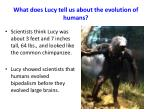 what does lucy tell us about the evolution of humans