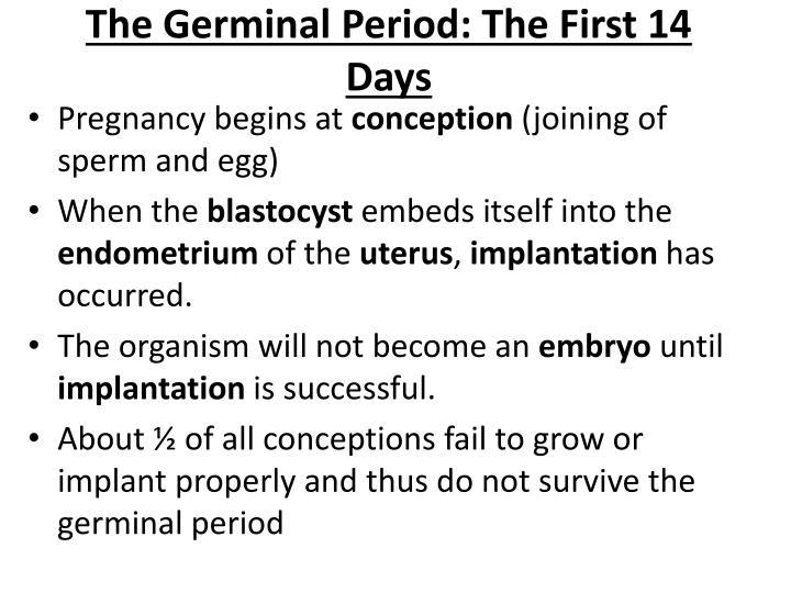 germinal period