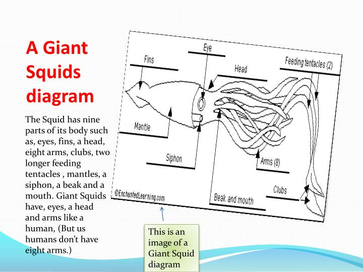 Ppt The Giant Squid Powerpoint Presentation Id2520589