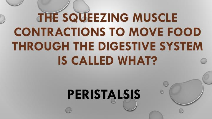 The squeezing muscle contractions to move food through the digestive system is called what