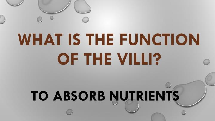 What is the function of the villi?