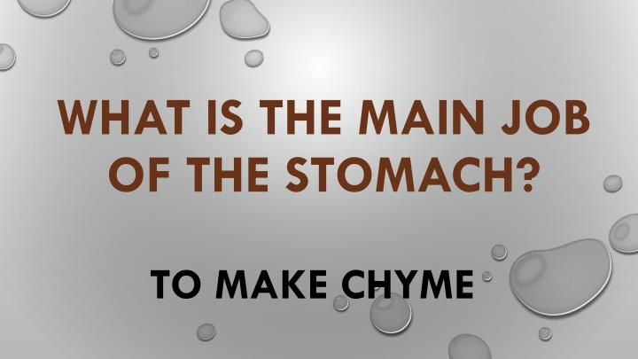What is the main job of the stomach?