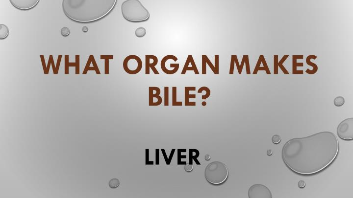 What organ makes bile?