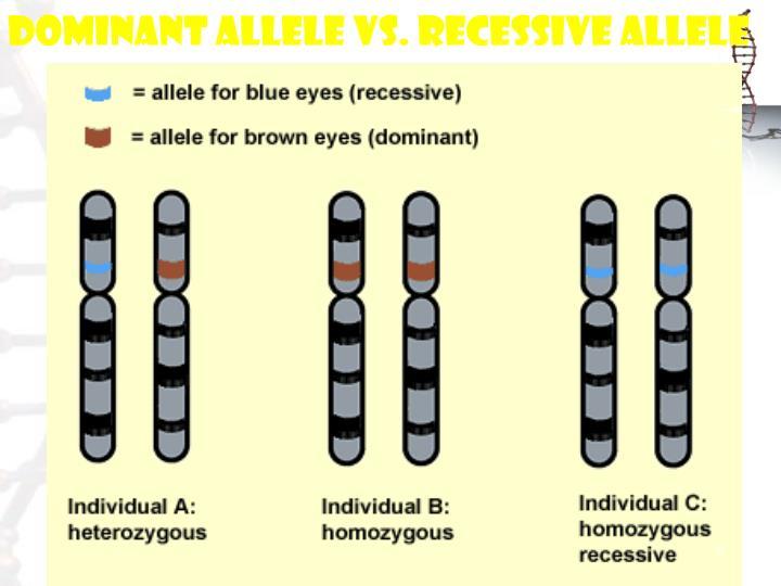 Dominant Allele vs. Recessive Allele