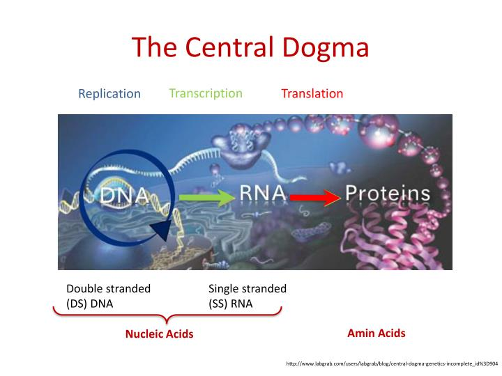 The Central Dogma