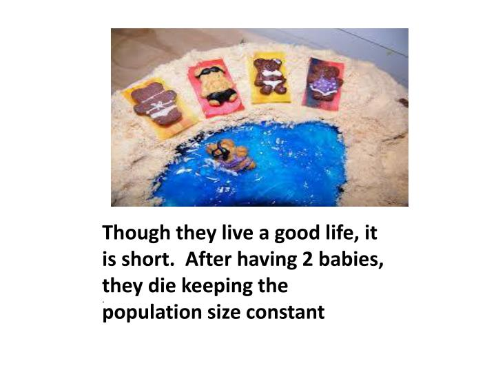 Though they live a good life, it is short.  After having 2 babies, they die keeping the population size constant