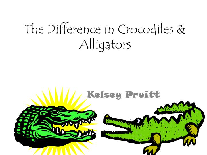 the difference in crocodiles alligators n.
