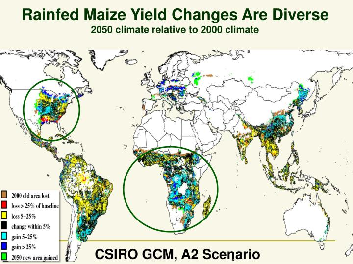 Rainfed Maize Yield Changes Are Diverse