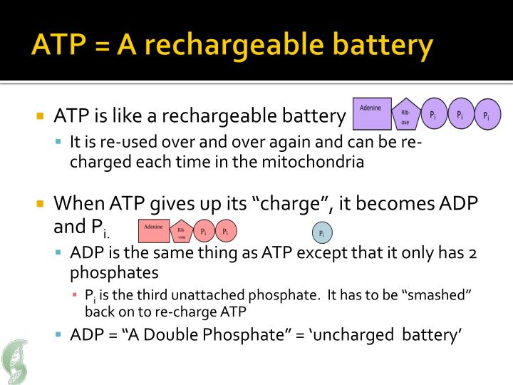 ATP = A rechargeable battery