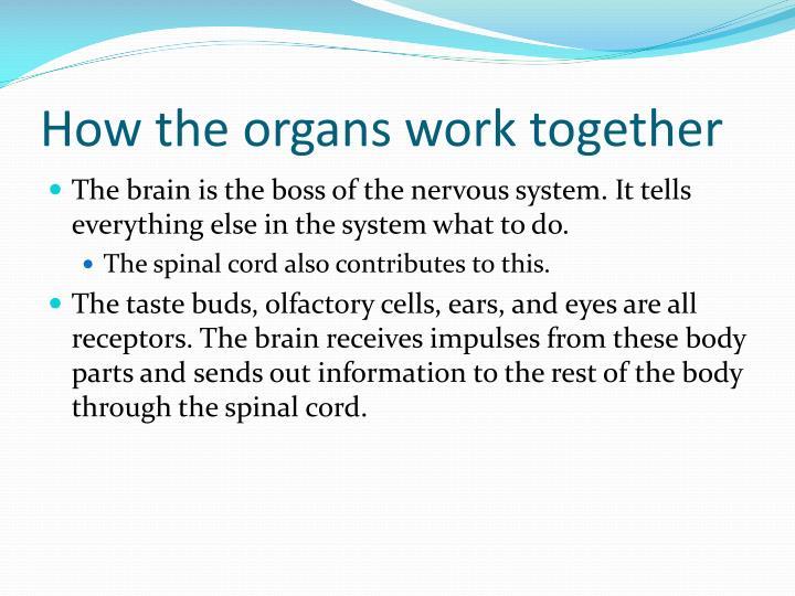 How the organs work together