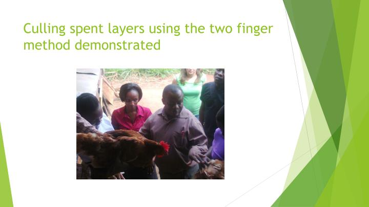 Culling spent layers using the two finger method demonstrated