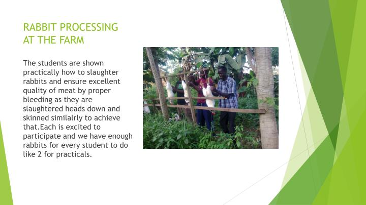 RABBIT PROCESSING AT THE FARM