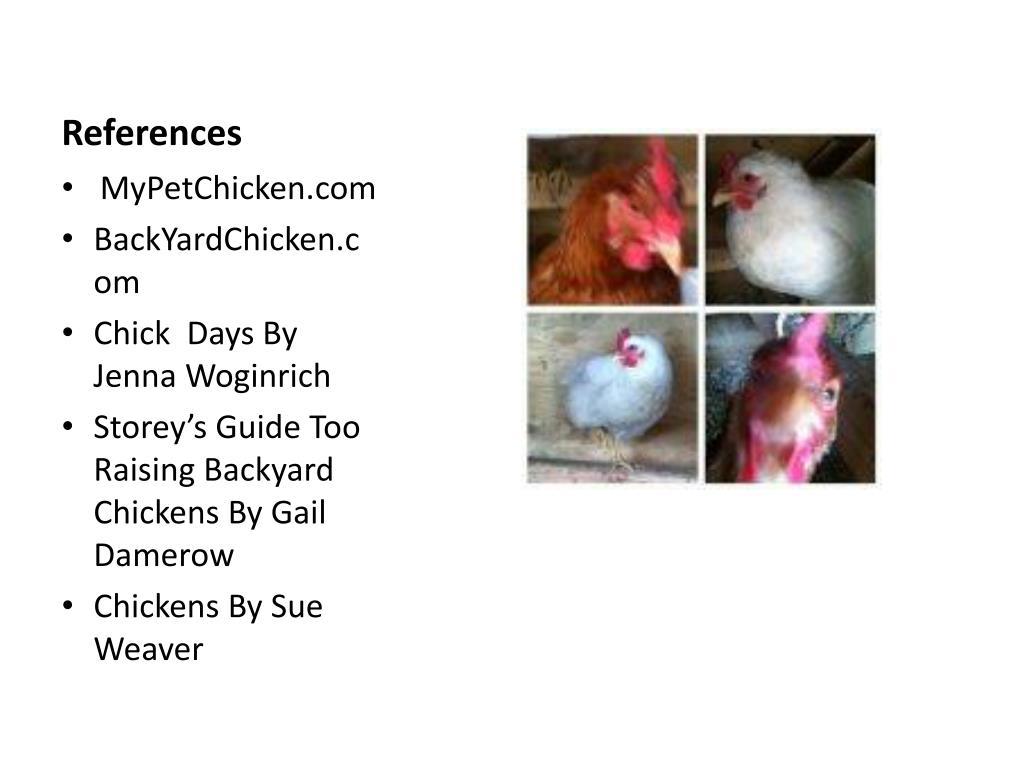 PPT - Raising Backyard Chickens PowerPoint Presentation - ID