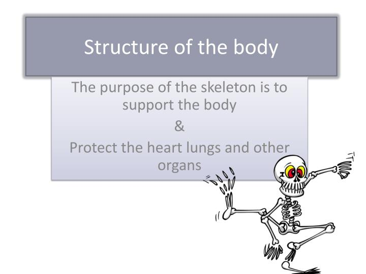 structure of the body n.