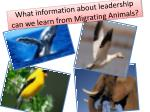what information about leadership can we learn from migrating animals