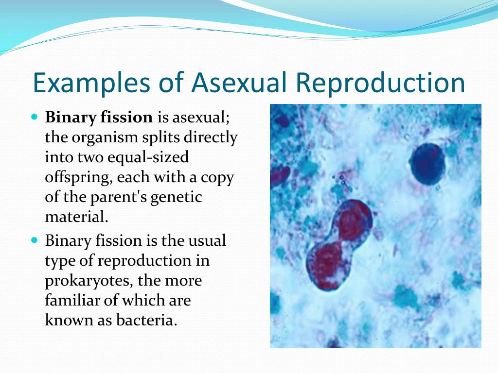 PPT - Cellular Reproduction PowerPoint Presentation - ID:2559250