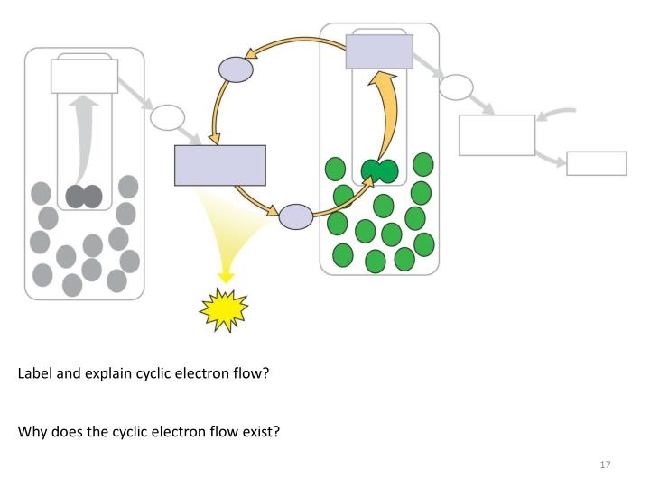 Label and explain cyclic electron flow?