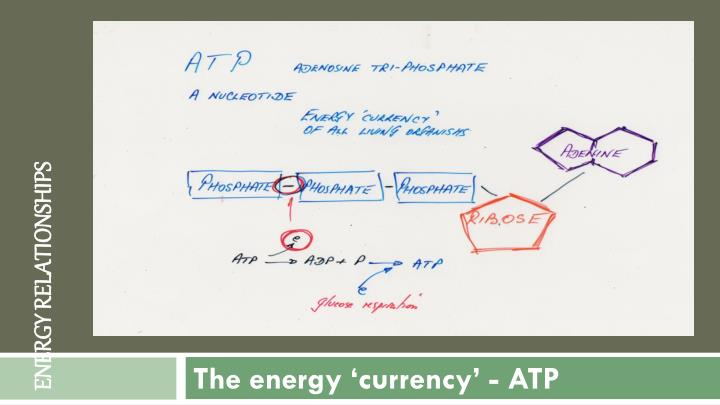 The energy currency atp