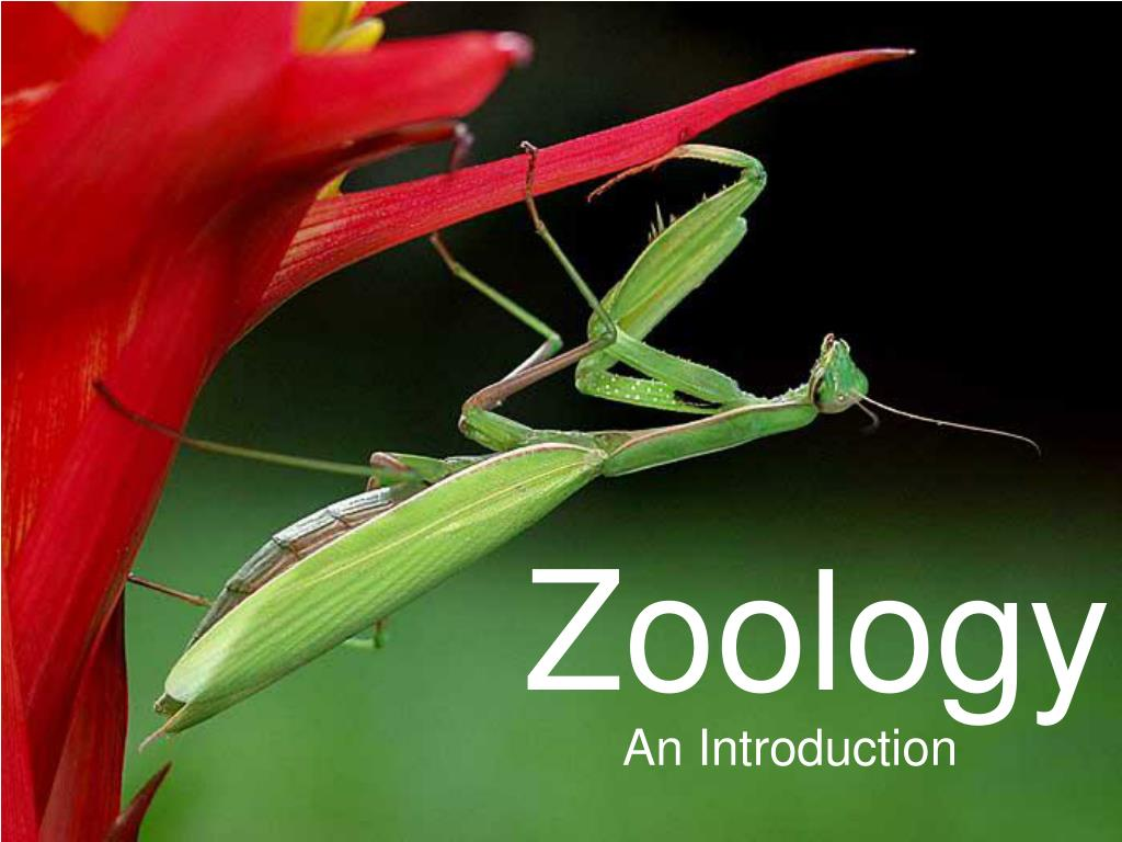 Ppt - Zoology Powerpoint Presentation  Free Download