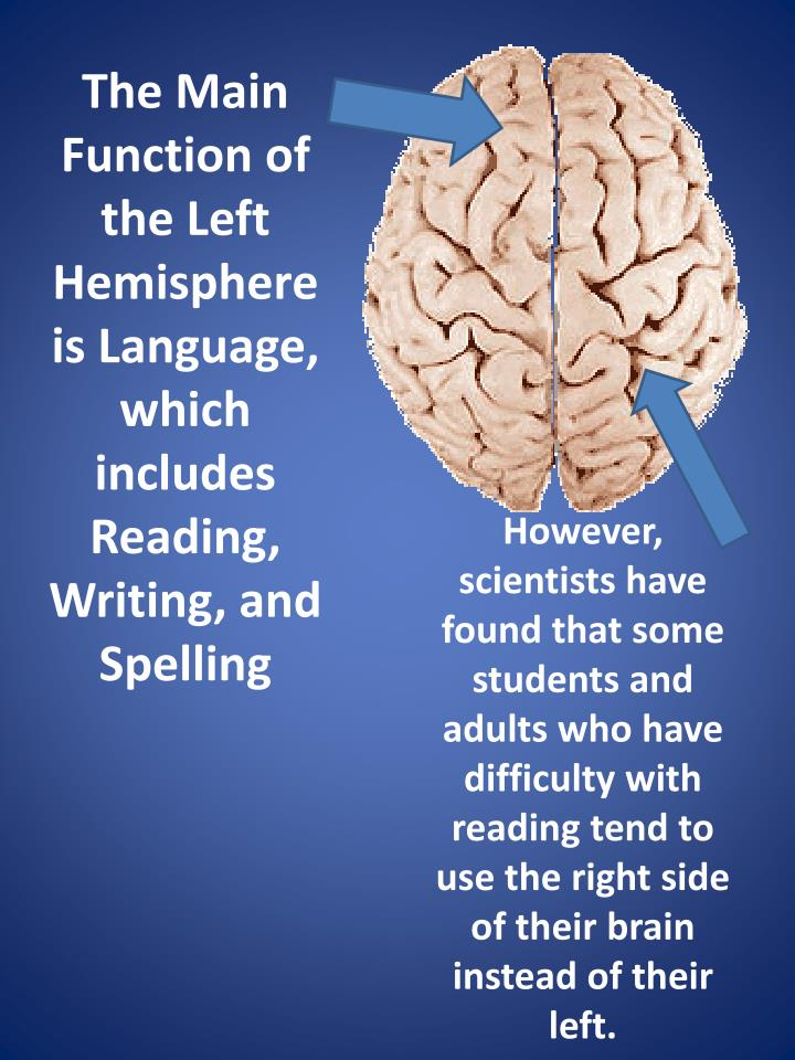 The Main Function of the Left Hemisphere