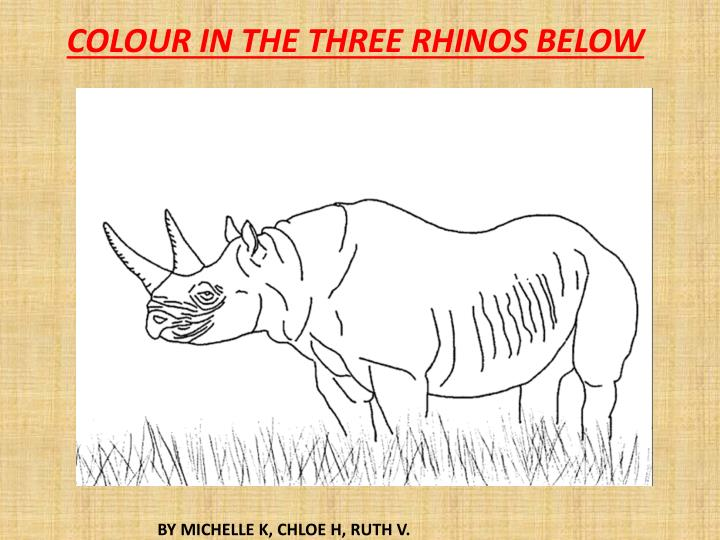 COLOUR IN THE THREE RHINOS BELOW