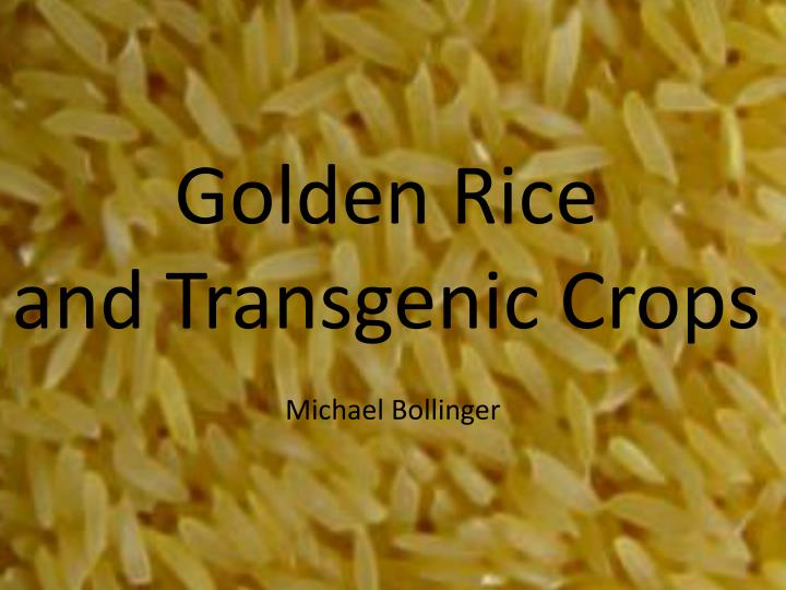 Ppt golden rice and transgenic crops powerpoint presentation id golden riceand transgenic crops toneelgroepblik