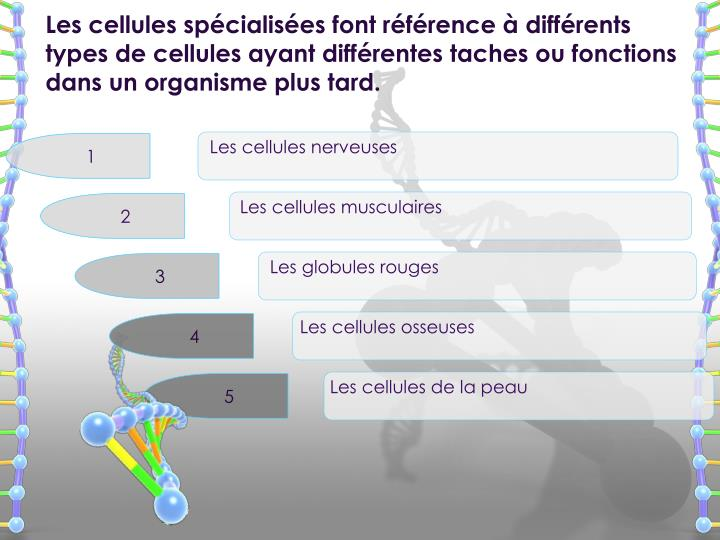 Les cellules spécialisées font référence à différents types de cellules ayant différentes tac...