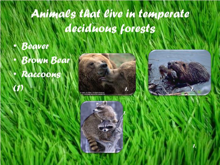 Animals that live in temperate deciduous forests