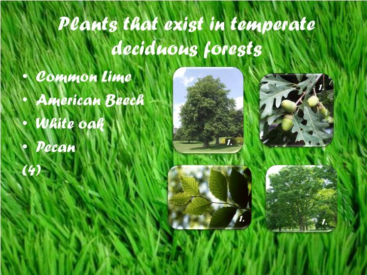 Plants that exist in temperate deciduous forests