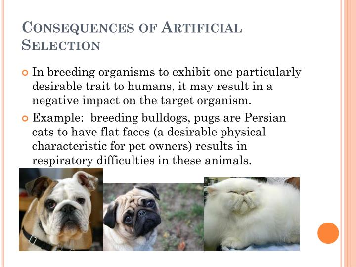 Ppt 72 Natural Selection And Artificial Selection Powerpoint