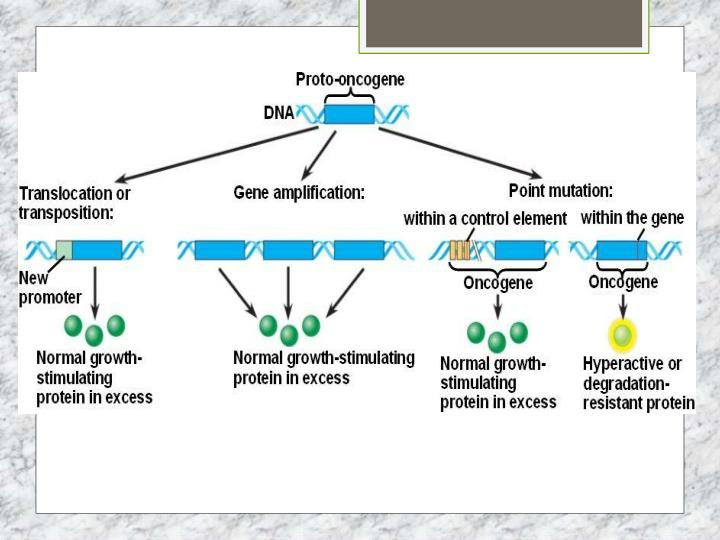 Proto oncogenes genes that encourage the growth of a cell