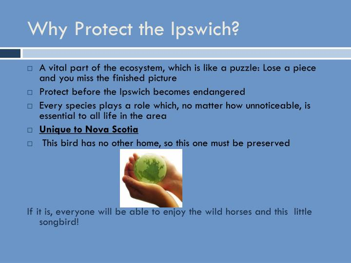 Why Protect the Ipswich?