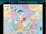 eab in north america