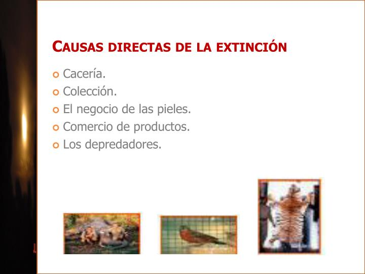 Causas directas de la extinción