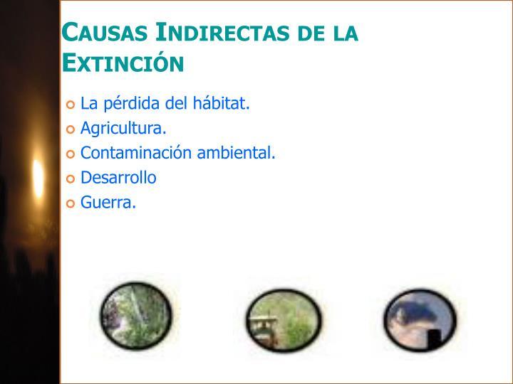 Causas Indirectas de la Extinción