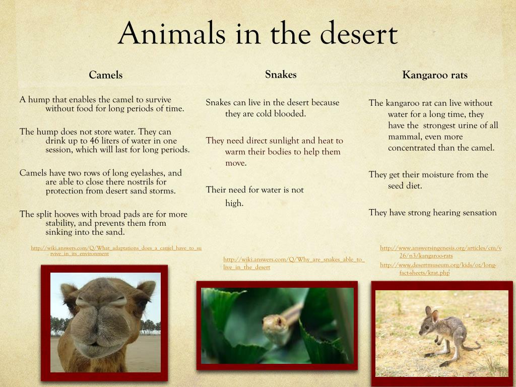 PPT - The Desert PowerPoint Presentation - ID:2582509