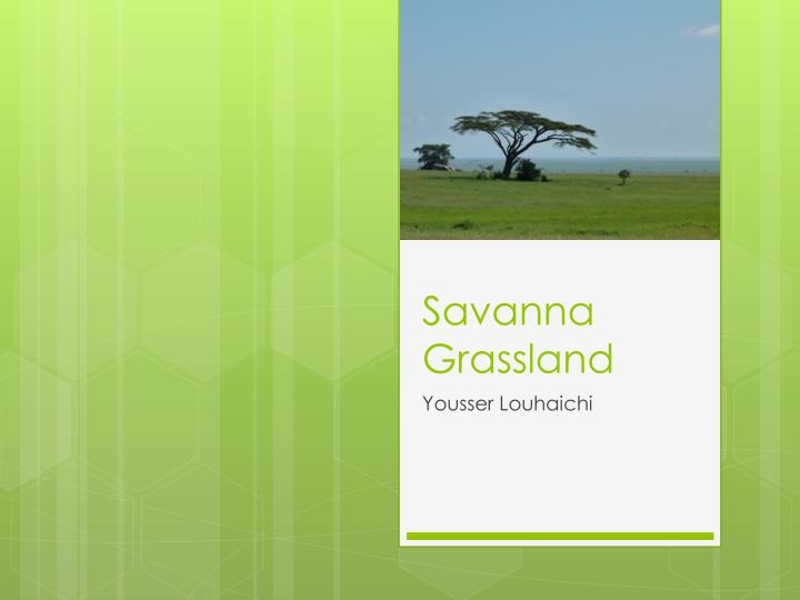 savanna grassland features Tropical & subtropical grasslands, savannas  biodiversity features the semi-arid lowlands around the head of the gulf of carpentaria form a notable disjunction in.