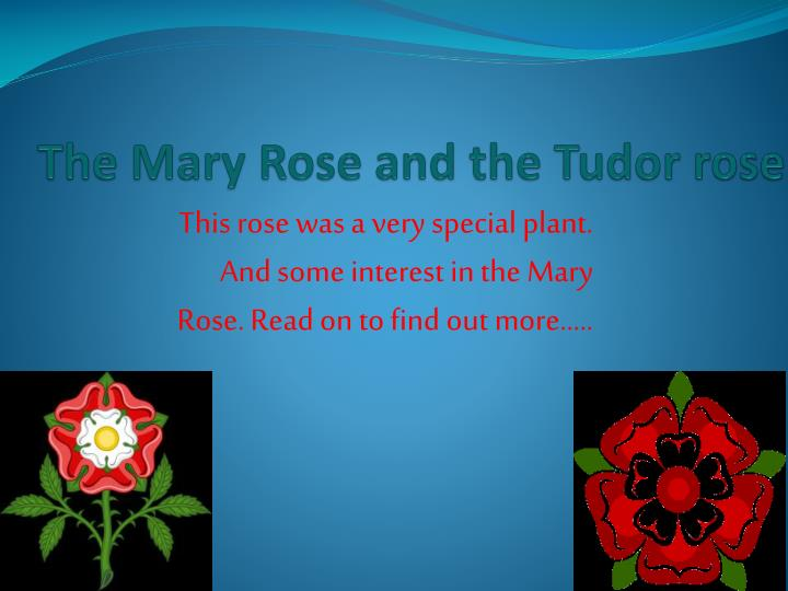 the mary rose and the tudor rose n.