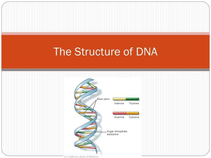 the structure of dna n.