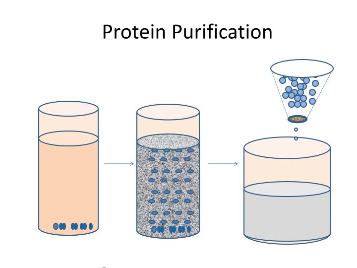 protein purification n.