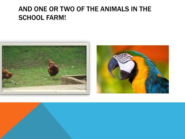 And one or two of the animals in the school farm!