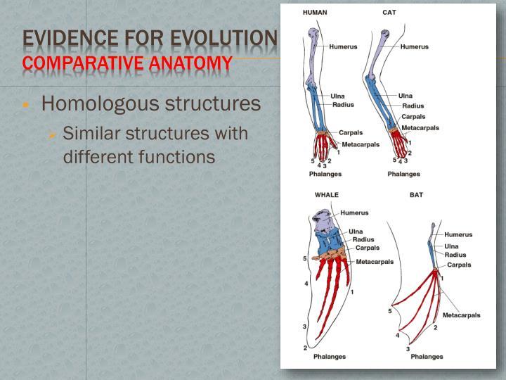 Ppt Mechanisms Of Evolution Powerpoint Presentation Id2585678