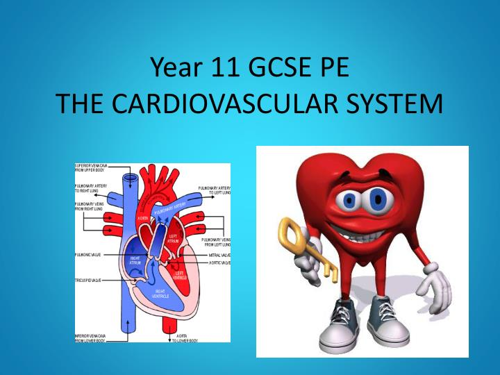 PPT - Year 11 GCSE PE THE CARDIOVASCULAR SYSTEM PowerPoint ...