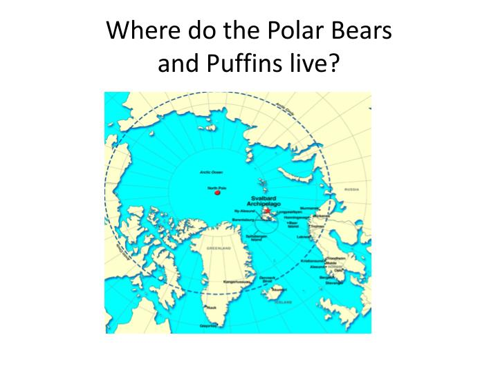 Where do the Polar Bears