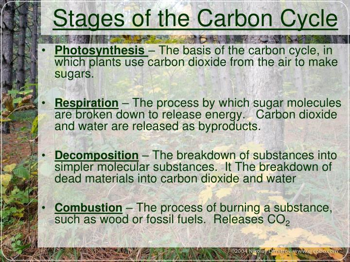 Stages of the Carbon Cycle