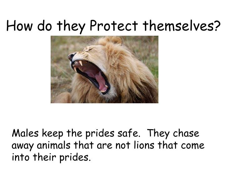 How do they Protect themselves?