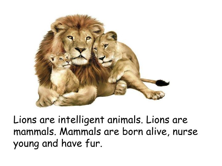 Lions are intelligent animals lions are mammals mammals are born alive nurse young and have fur
